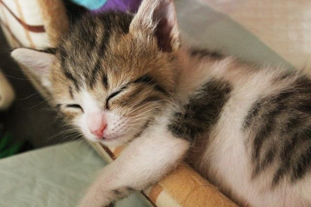 ペットとの添い寝は寝不足を招く?睡眠とペットの関係とは