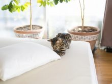 仰向け、横向き、どちらに合わせる?一晩じゅう快適な枕の選び方とは?