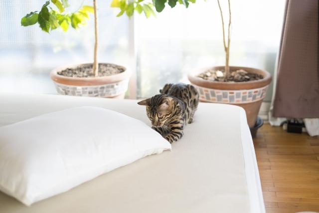 仰向け、横向き、どちらに合わせる?一晩じゅう快適な枕の選び方とは?1